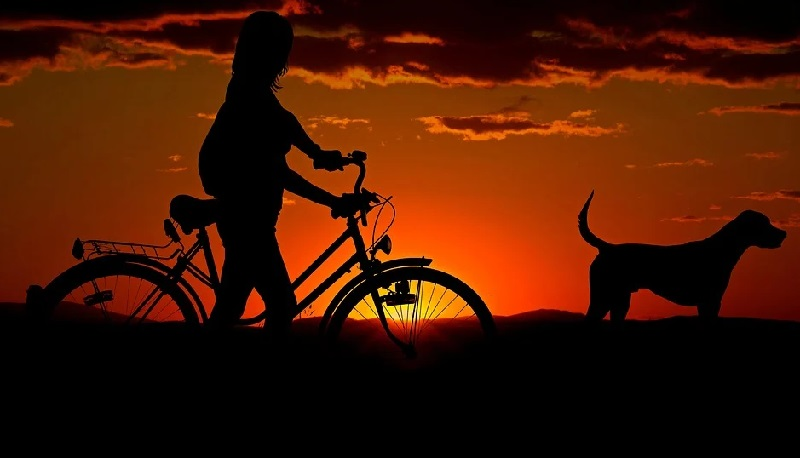 Mit Hund auf Achse
